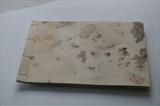 Abandoned Shore by Estella Scholes, Artist Book, Drypoint, blind emboss, cut out on rusted paper